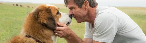 A Dog's Purpose's Purpose: To Make You Cry Mostly