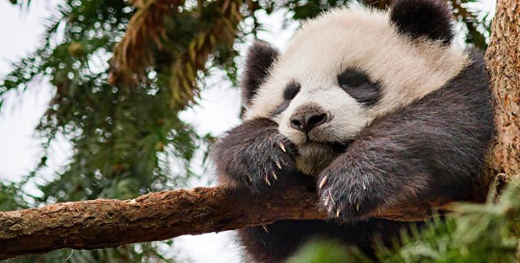 'Born in China' Offers an Intimate - and Emotional - Look at Wildlife of China