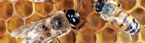 Stung Reminds You Of The Consequences of Extinction and Genetic Engineering