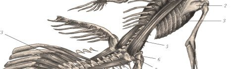 The Resurrectionist is a Stunningly Illustrated Must-Read for Historical Science Fiction Fans